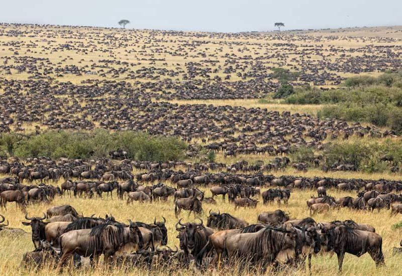 7-Day Ngorongoro Serengeti & Zanzibar