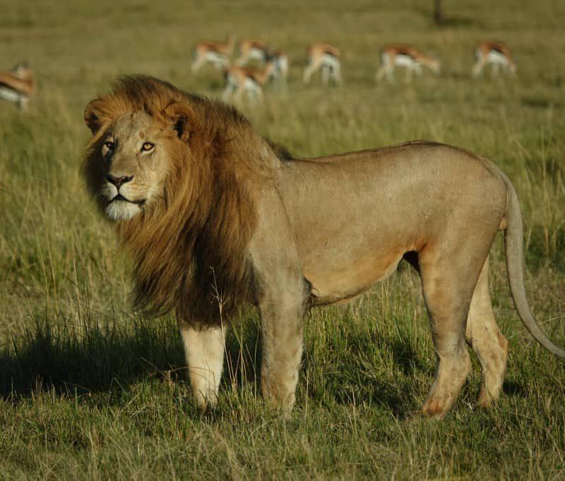 3 Day Tarangire Wildlife