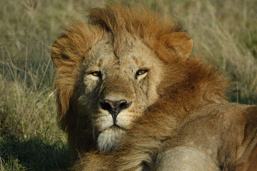 8 Day Uganda Wildlife