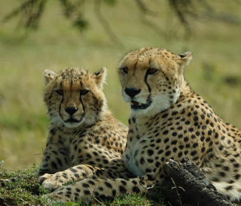 3 Day Serengeti National