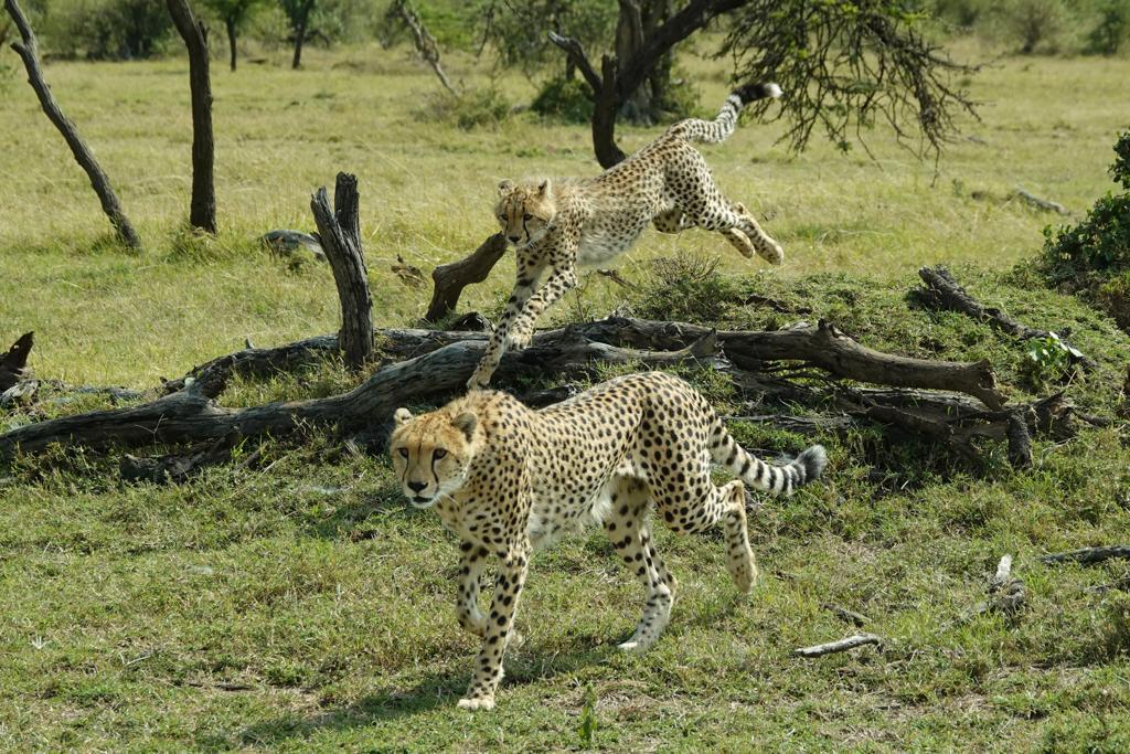 3 Day Safari to Ngorongoro