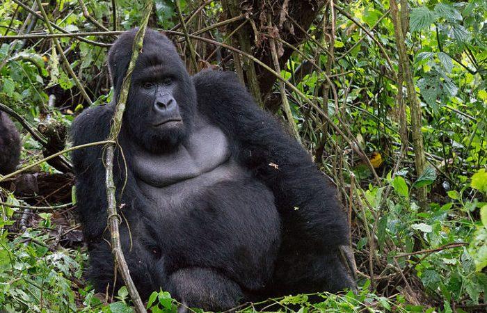 3 days Gorilla Trekking
