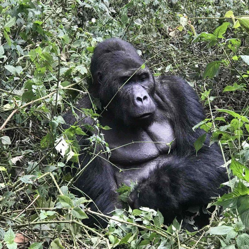 3 Day Gorilla Trekking Mgahinga