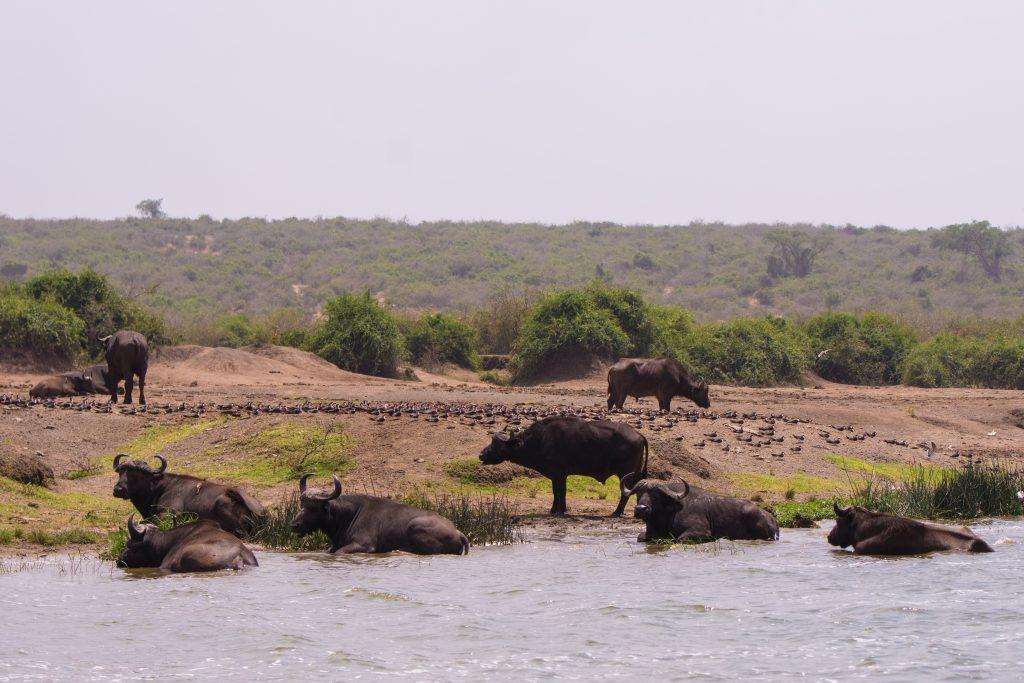 15 Days Adventure Rwanda Uganda