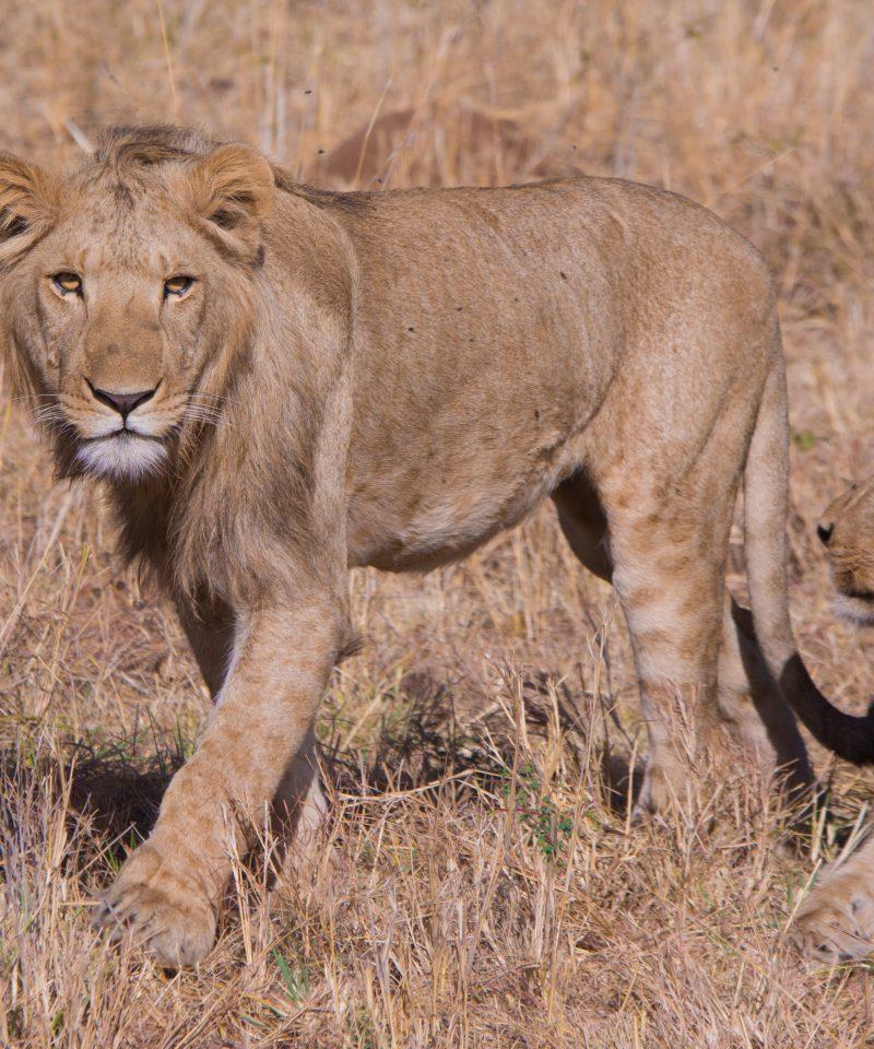 5 Day Amboseli & Masai