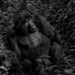 10-Days Wildlife Gorillas & Primates