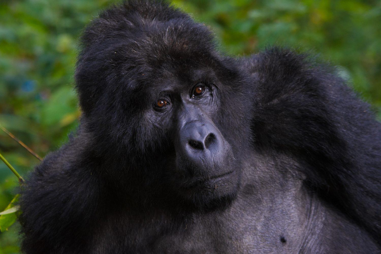 4 Days Gorillas and Lake